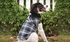 Outdoor Dog Adirondack Jacket: $11.99 for an Outdoor Dog Adirondack Plaid Jacket (Up to $32.99 List Price)