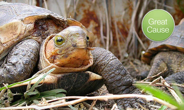 American Tortoise Rescue - American Tortoise Rescue: $10 Donation to Help Feed Rescued Turtles