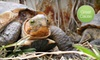 (G-Team) American Tortoise Rescue - American Tortoise Rescue: $10 Donation to Help Feed Rescued Turtles