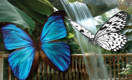 Niagara falls butterfly conservatory coupons