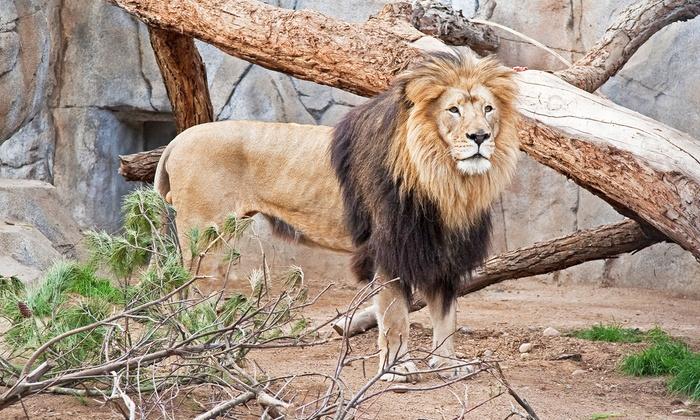 San diego zoo coupons groupon