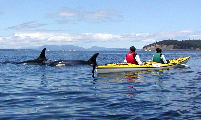 Crystal Seas Kayaking - San Juan Island: San Juan Island Kayaking Tour for One, Two, or Four from Crystal Seas Kayaking (Up to 48% Off)