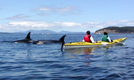 San Juan Island Kayaking Tour for One, Two, or Four from Crystal Seas Kayaking (Up to 56% Off)