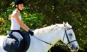 Sol Events: One or Three Horseback-Riding Lessons for Up to Two at Sol Events (Up to 54% Off)