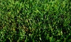 Weed Man: Full Weed-Control and Crabgrass Treatment with Optional Fertilizer Treatment from Weed Man (75% Off)