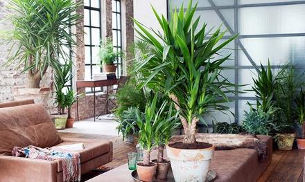 Set van 4 palmen voor binnen