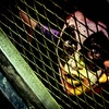 Up to 59% Off Haunted-House Tour