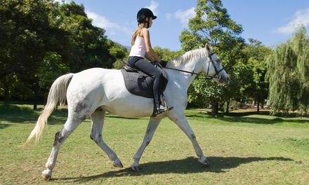 One or Three Horseback Riding Lessons at Sacramento Riding School (Up to 54% Off)