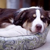 Up to 41% Off a Nap Paisley Pet Lounger