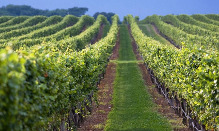 Pindar Vineyards - Peconic: Wine Tasting for Two or Four with Cheese, Crackers, and Champagne at Pindar Vineyards (Up to 48% Off)