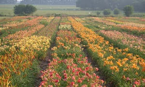 Gilbert H. Wild and Son: $15 for $25 Worth of Flowers, Bulbs, and Plants at Gilbert H. Wild and Son