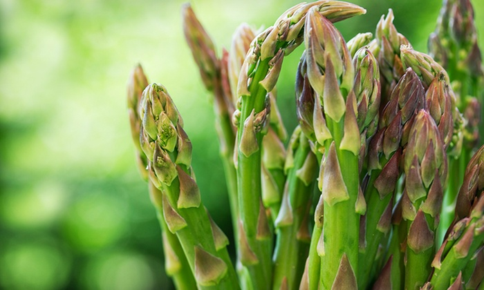 Asparagus Plant Bundle: Asparagus Plant Bundle. Free Returns.