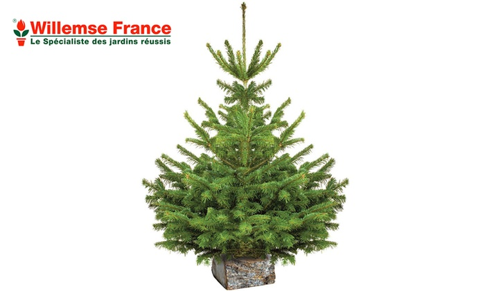 sapin nordmann - willemse france_g1 | groupon