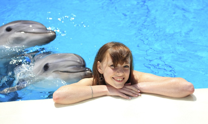 Miami Seaquarium - Virginia Key: Dolphin Encounter or Dolphin Odyssey with Photo Package at Miami Seaquarium (Up to 48% Off). Two options.