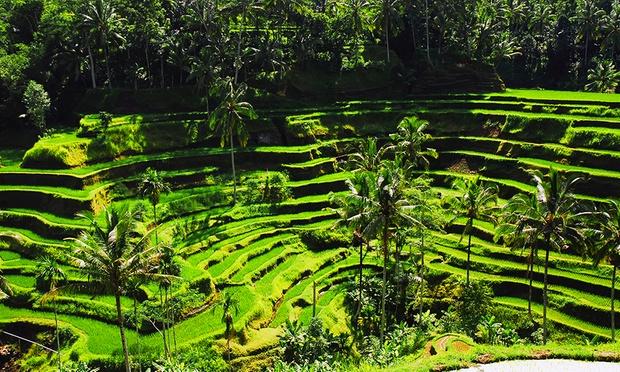 Bali: 5* Plataran Canggu Resort 7