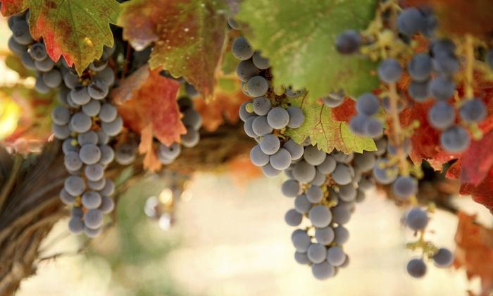 Jules J. Berta Vineyards - Albertville: $20 for $36 Worth of Wine Tasting for Two, with Glasses and Wine Tote — Jules J. Berta Vineyards