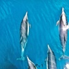 Up to 53% Off Seafari Tour from Channel Islands Whale Watching