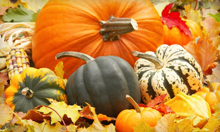 The Pumpkin Patch San Antonio - Far West Side: Fall-Festival Package with Hayride at The Pumpkin Patch San Antonio (Half Off). Two Options Available.