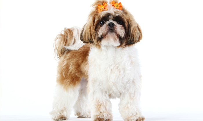 Grooming by Pawcasso - Regency Industrial: $26 for Basic Grooming of a Small Dog Up to 20 Pounds at Grooming by Pawcasso ($45 Value)