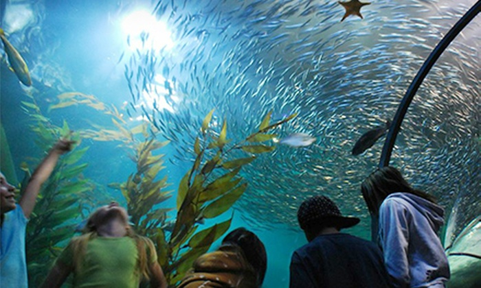 Aquarium of the Bay - Fisherman's Wharf, North Beach/Telegraph Hill: Day at the Aquarium of the Bay for One Adult, One Child, or One Family of Four (Up to Half Off)
