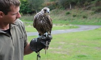 Hawk Experience for Up to Four at North East Falconry