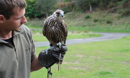 North East Falconry