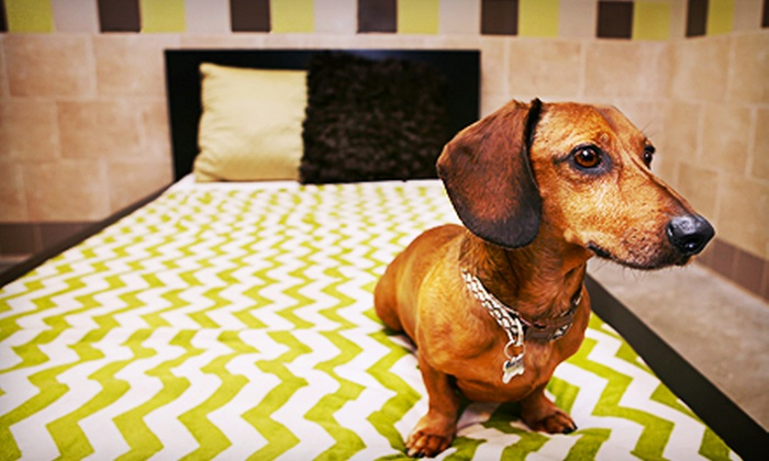 Pooch Hotel - Multiple Locations: $119 for Five Days of Dog Boarding in a Standard Suite or Ten Days of Dog Daycare at Pooch Hotel (Up to $250 Value)