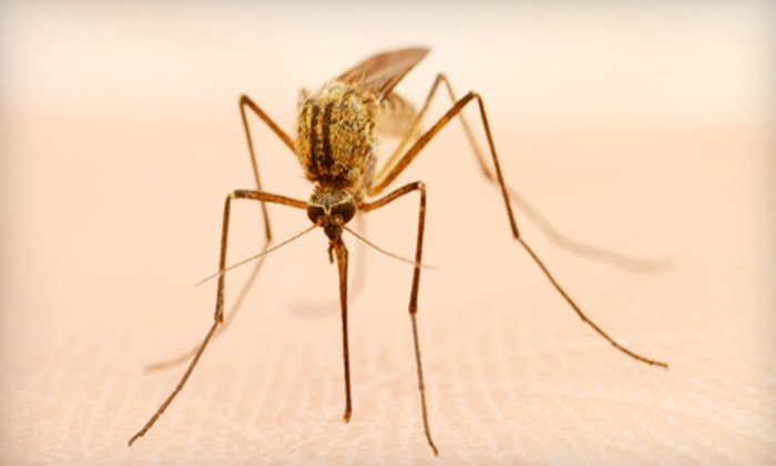 Bullseye Pest Defense - Lansing: $20 for Home Mosquito or Pest Control or Commercial Pest Control from Bullseye Pest Defense (Up to $60 Value)