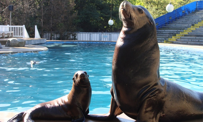 Oceans of Fun - Oceans of Fun: $55 for Hands-On Sea Lion Splash Program on Animal Training at Oceans of Fun ($100 Value)