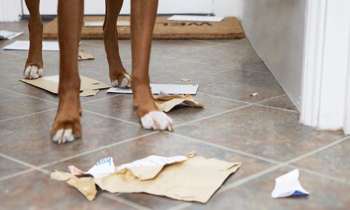 Dog Speak Training - Phoenix: $61 for $100 Worth of Obedience Training — Dog Speak Training