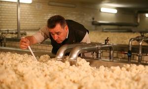 Landskron Brau-Manufaktur: Brauereiführung für Zwei oder Vier mit Bierverkostung satt und Mutzbraten in der Landskron Brau-Manufaktur ab 29,90 €