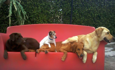 1 Trial Day of Doggy Daycare and 2 Consecutive Nights of Boarding (a $115 value) - Camp Canine in Hollywood