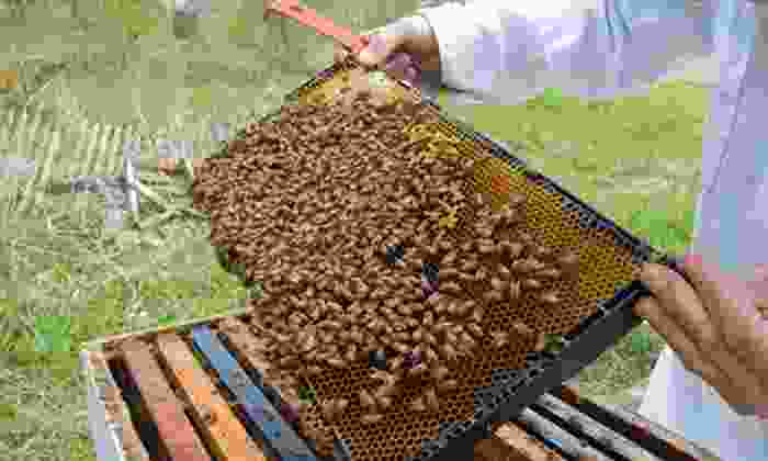 Honeybee Centre - Surrey: $7 for a Visit for Four to the Bees & Bugs Lab at Honeybee Centre (Up to $15 Value)