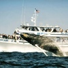 Up to 40% Off Whale-Watching Cruise