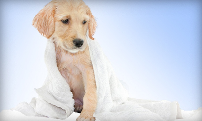 Happy Hounds Pet Grooming - Pulpit Rock: Dog Spa Outing for Small, Medium, or Large Dogs at Happy Hounds Pet Grooming (Up to 50% Off)