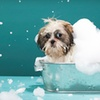 Half Off a Dog Bath and Nail Trim at The Dog Groomery
