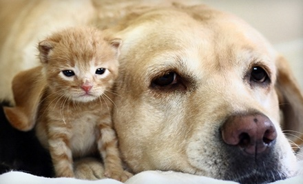 Cat or Dog Wellness Exam or Annual Checkup with Vaccines at Tamiami Trail Animal Clinic (78% Off)