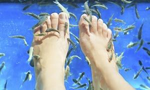 Soignez vos pieds avec une fish pédicure