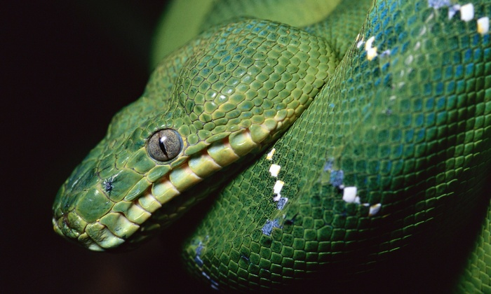 ReptiDay - Norfolk Masonic Temple: ReptiDay on Saturday, April 23, at 10 a.m.