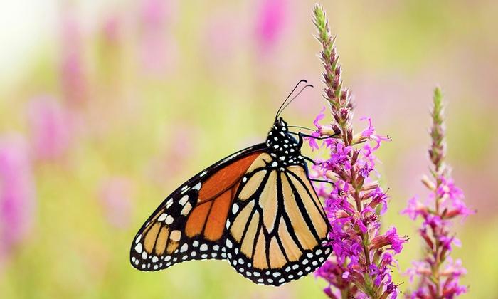 Greathouse Butterfly Farm - Earleton: Butterfly Tour for Four or Six at Greathouse Butterfly Farm (50% Off)