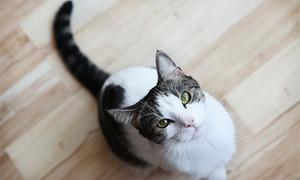 Holly and Hugo: Alles was een poezenliefheb(st)er moet weten om een kat- en kitten te verzorgen