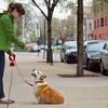 Up to 53% Off Dog-Behavior Training
