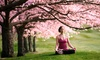 Yoga Nidra Studio - Dyker Heights: 10 Yoga Classes or One Month of Yoga Classes and Two Reiki Sessions at Yoga Nidra Studio (Up to 68% Off)