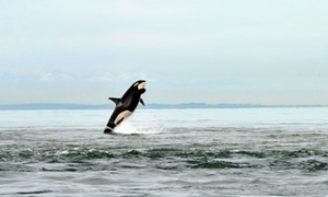 Outer Island Expeditions: $65 for a 3.5-Hour Whale-Watching Trip from Outer Island Expeditions ($109 Value)