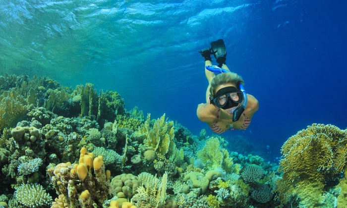 Diving Catalina - Diving Catalina: Traditional or Power-Snorkeling Tour for One, Two, or Four from Diving Catalina (Up to 55% Off)