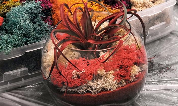 Two-Hour Zen Crystal Terrarium Making Workshop - Luludi Living Art Store: Plant Living Art During a Zen Crystal Terrarium-Making Class