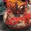 Plant Living Art During a Zen Crystal Terrarium-Making Class
