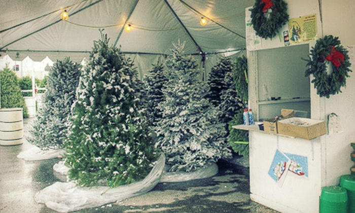 ABC Tree Farms - Evergreen: Winter Wonderland Admission for Two, Four, or Six at ABC Tree Farms (Half Off)