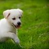 Up to 61% Off Pet Care in West Jordan