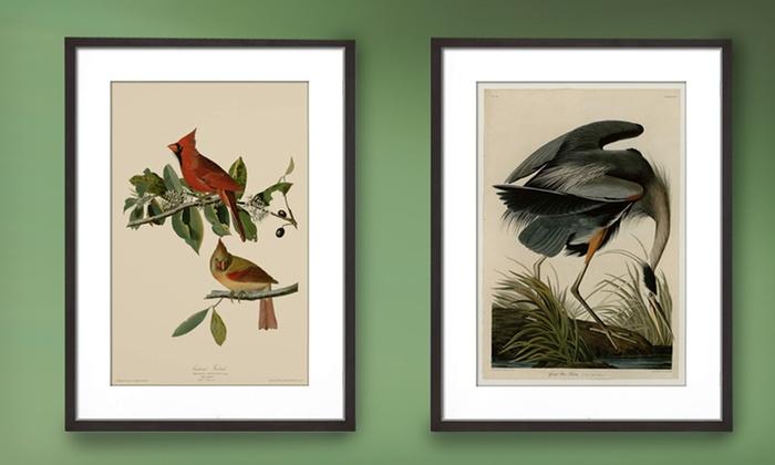Framed Audubon Bird Print | Groupon Goods